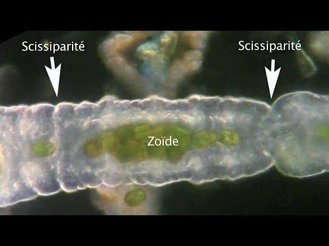 Egy pár csepp víz a parazitákból. Illatrend - Havasi Patrícia