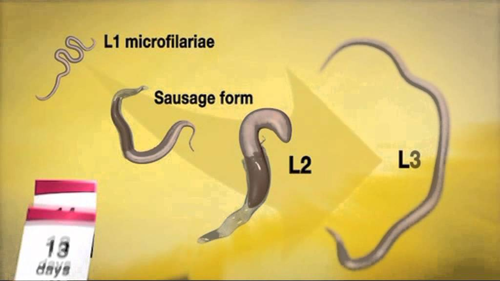 fagyasztó paraziták)
