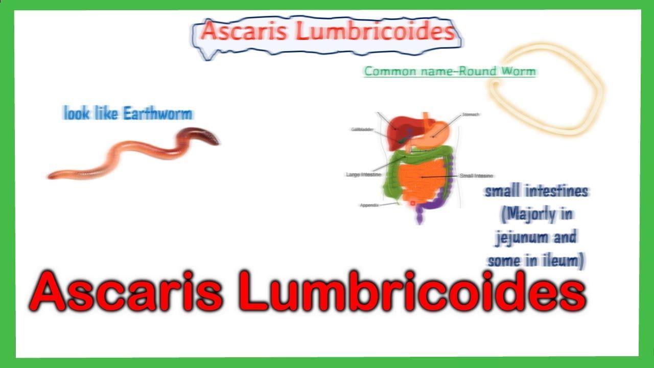 ascariasis gabonafolt)