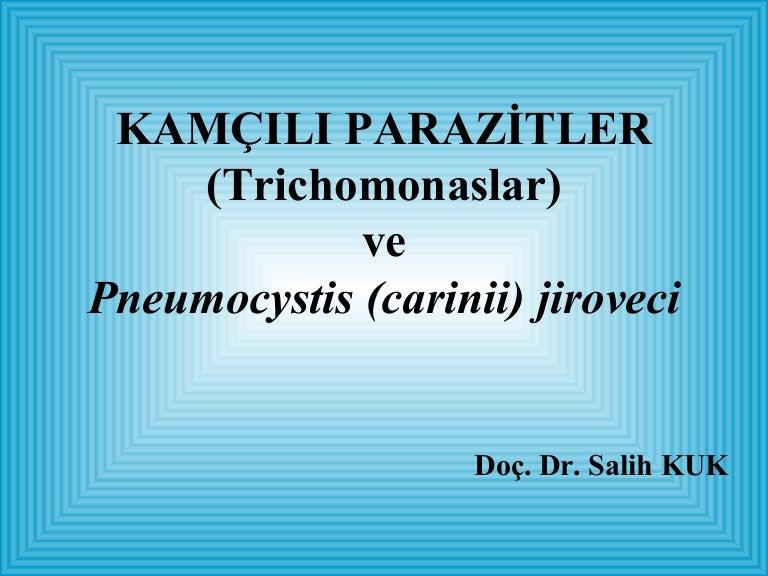 pinworms felülvizsgálja a parazitológusokat