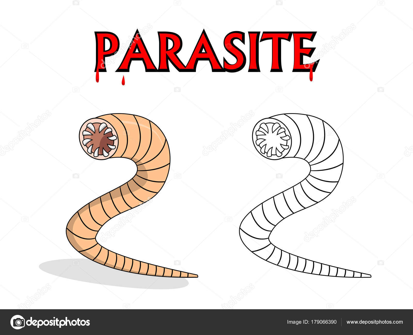 annelid parazita
