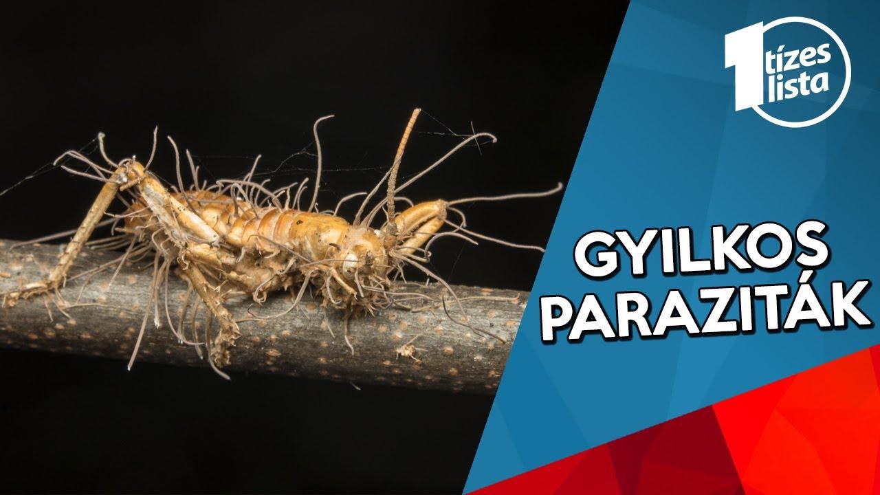 az emberi szerveket érintő paraziták paraziták nyirokcsomói