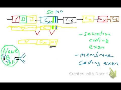 mi az antitestek szerepe a helminthiasisban)