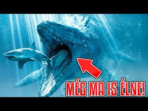 férgek paraziták a bálnák