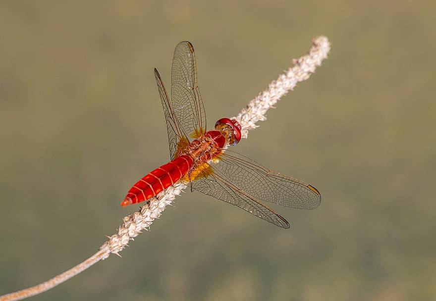 teljesen szabaduljon meg a parazitáktól fórum a paraziták eltávolítására