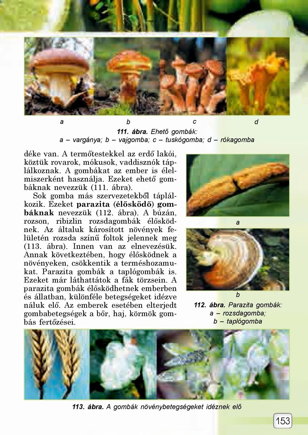 paraziták az ökológiában
