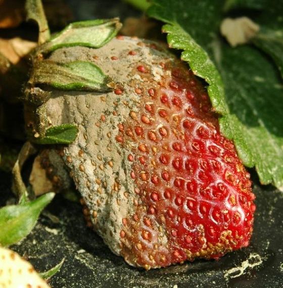 hőmérséklet- emelkedés parazitákkal bélparaziták vélemények