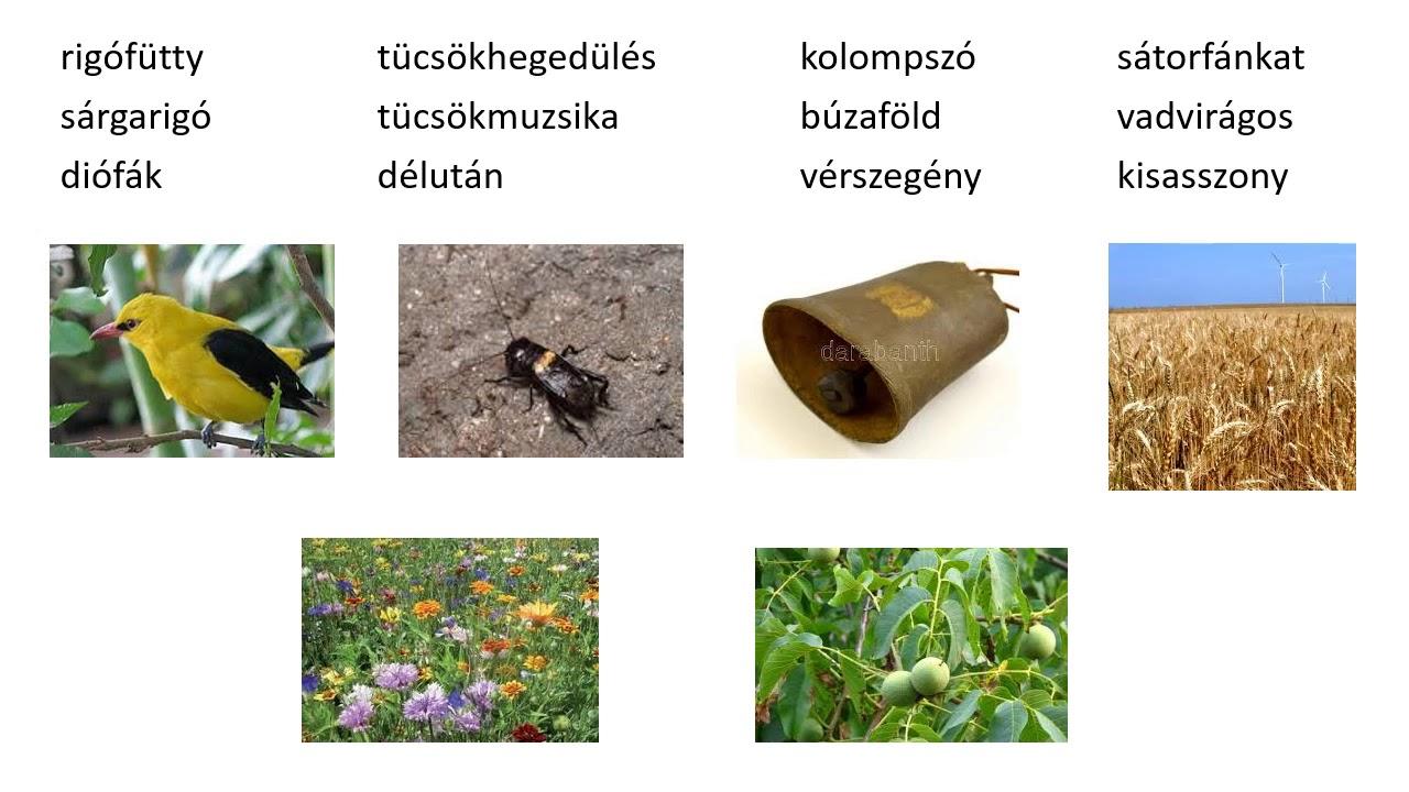 jó orvosság pinworms vélemények)