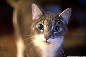 macska lehelet