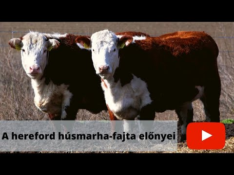 Az ember szarvasmarha féreg. Enterobiasis Van-e szája a szarvasmarha-galandféregnek?