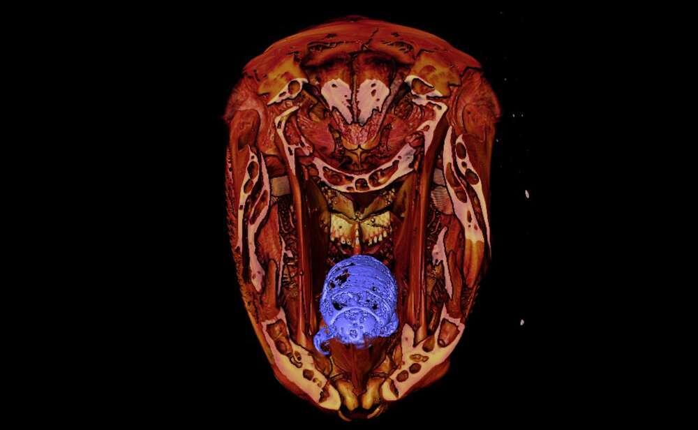 parazita a kopoltyúkon
