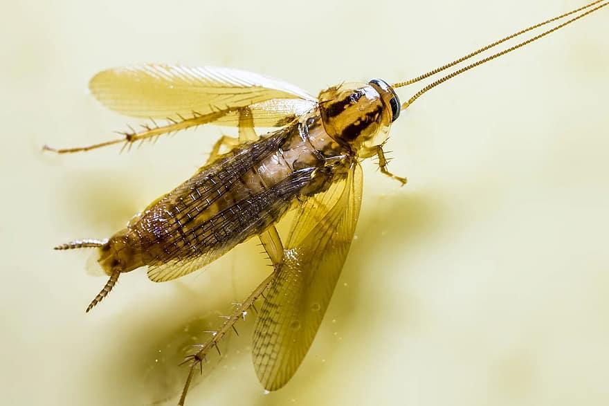 parazita kártevő