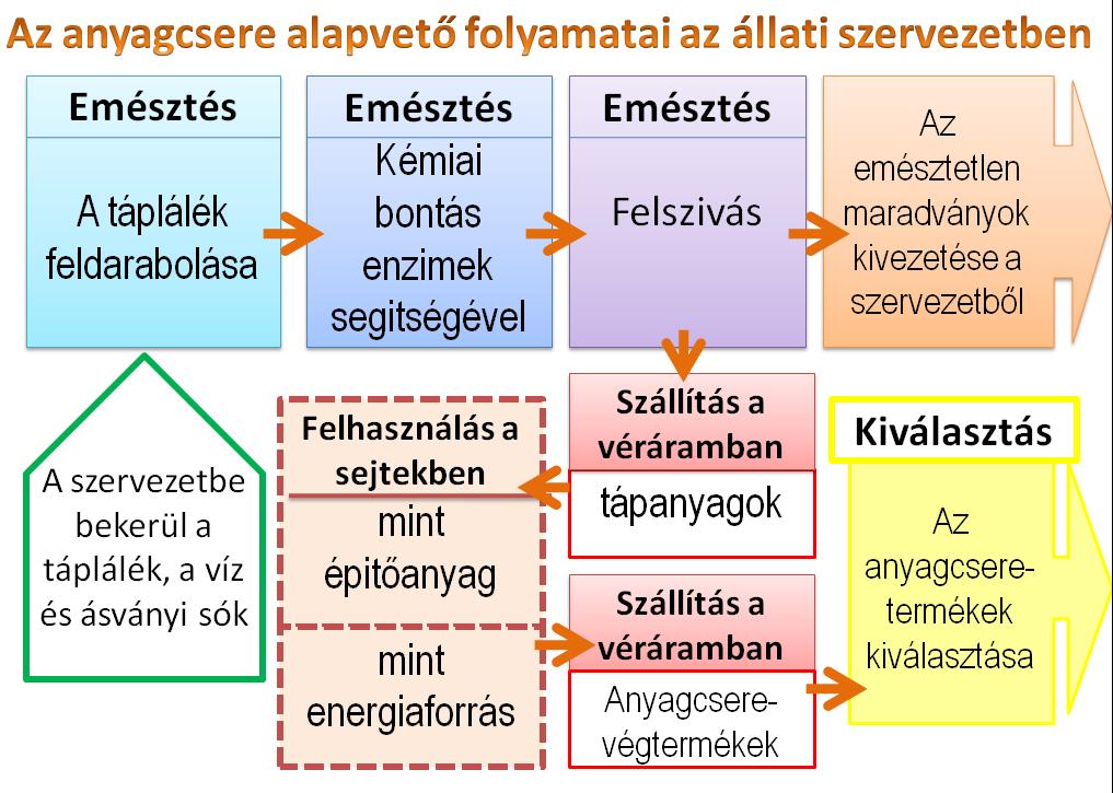 paraziták autotrófok vagy heterotrófok