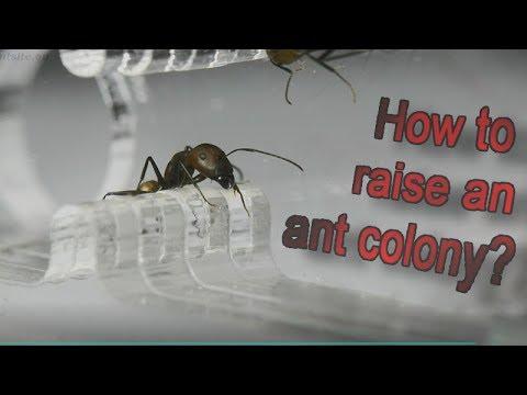 paraziták ember körömférgében paraziták a szemben és a tünetek