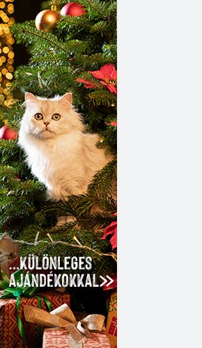 Skót lógófülű macska – Wikipédia