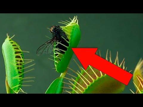 paraziták a testért folytatott harcban