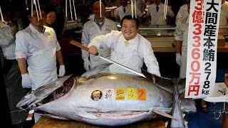 tonhal vannak paraziták
