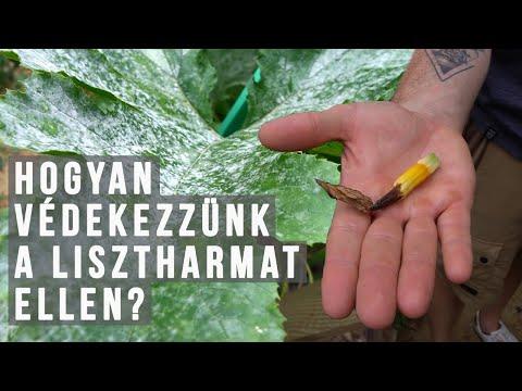 áttekinti a cég parazita pro szájából az aceton szaga mit kell tenni