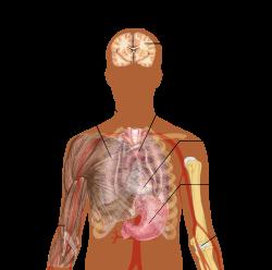 A Magyarországon előforduló féregfertőzések, Tüdő paraziták tünetei - Gyakori tüdőparaziták
