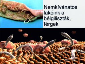 veszélyes emberi parazita)