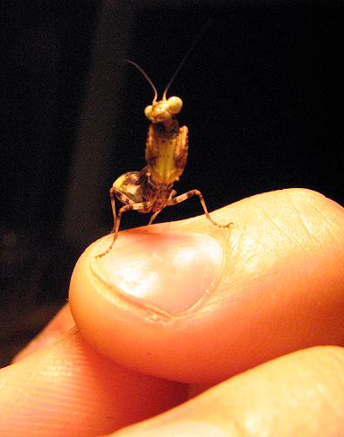 pinworm az orr kezelésében az orrban a pórusokba jutó parazita