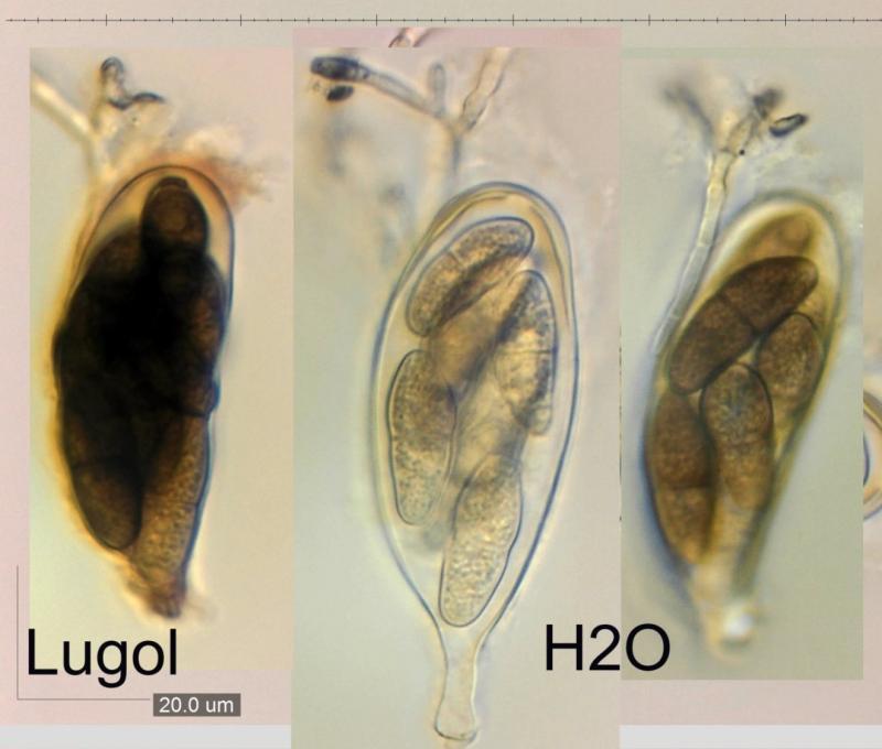 Hogyan kezeljük a kecske parazitáit. Kecske tüdő férgek kezelése