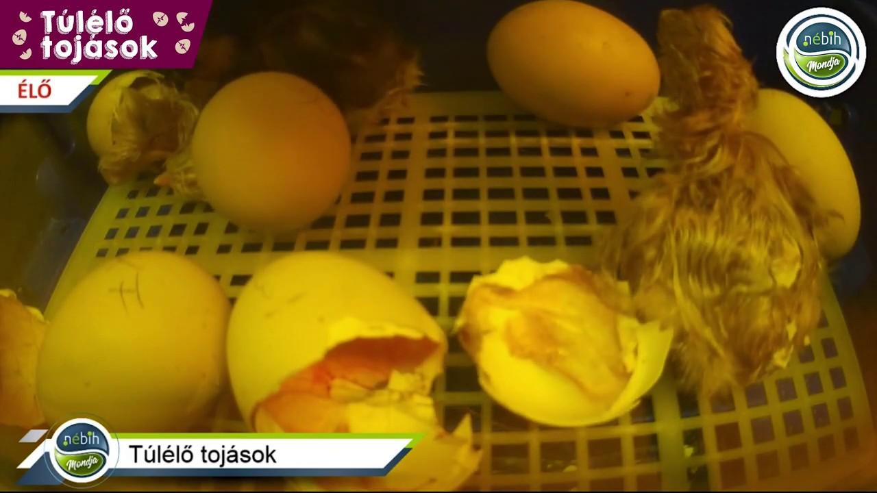 Körömféreg-tojás kezelése. Kerekféreg tojás gyógyszer. Ekcéma és belek