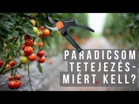 pasziánsz paradicsom)