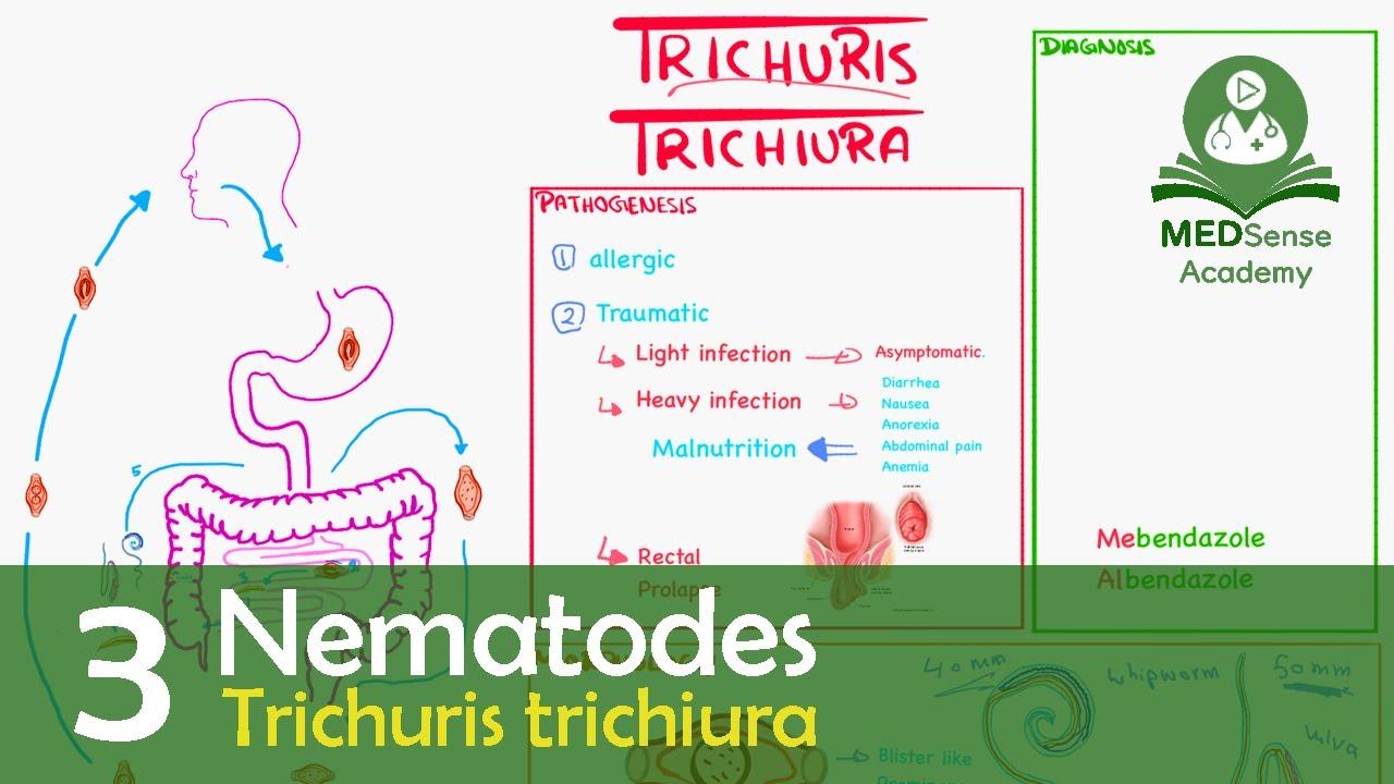 Moniesia helmintus - A helminthiasis Г©letkori diagnГіzisa
