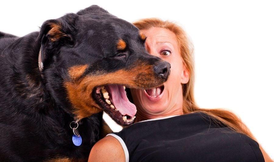 kutya lehelete)