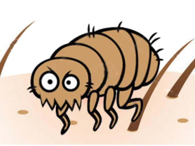 paraziták a bőr alatt az arcon